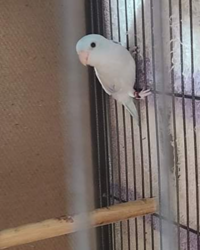 Lost Male Bird last seen Superstition and Power, Mesa, AZ 85209