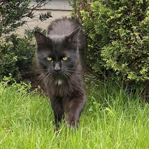 Found/Stray Unknown Cat last seen Brooklawn Ave/Park Ave, Bridgeport, CT 06604