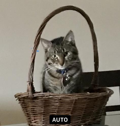 Lost Male Cat last seen Near Northside Park, Norfolk, VA 23503