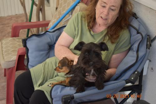 Lost Female Dog last seen Palos Verdes Drive East near Sunnyside Ridge Rd. in Rancho Palos Verdes CA, Rancho Palos Verdes, CA 90275