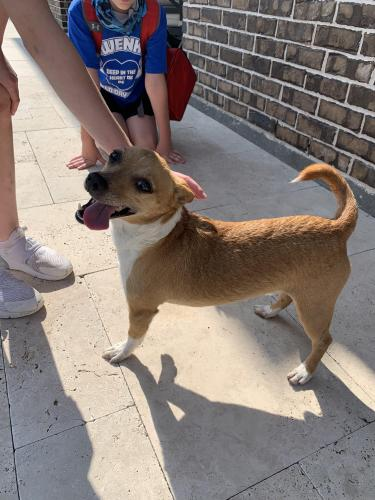 Found/Stray Male Dog last seen Ochre Park and Fading Rose Lane , Cypress, TX 77429