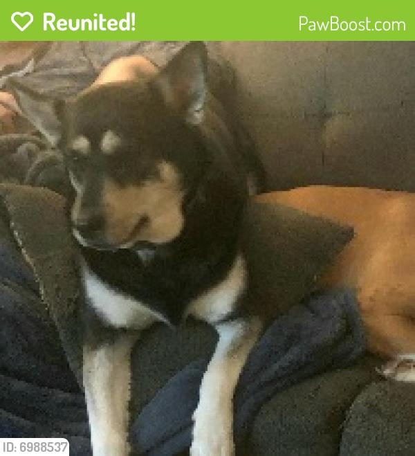 Reunited Female Dog last seen University, Des Moines, IA 50311