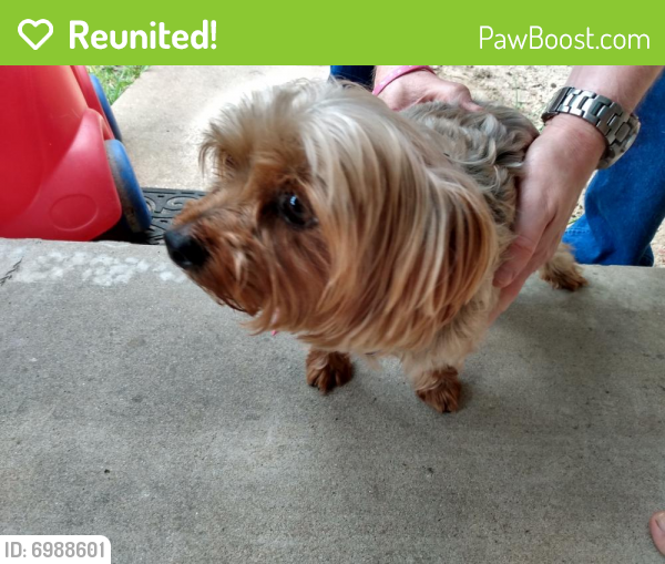 Reunited Male Dog last seen Jester Farms Subdivision, Round Rock, TX 78664
