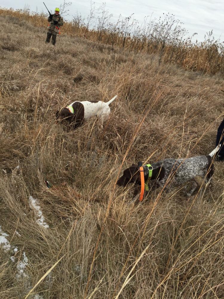 Reunited Female Dog last seen Fielder and Randol Mill, Arlington, TX 76012
