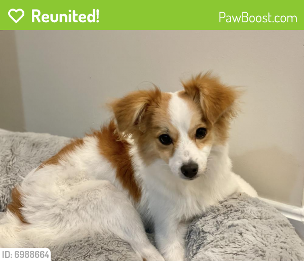 Reunited Male Dog last seen S Park Circle and LakeTree , Fairfax Station, VA 22039