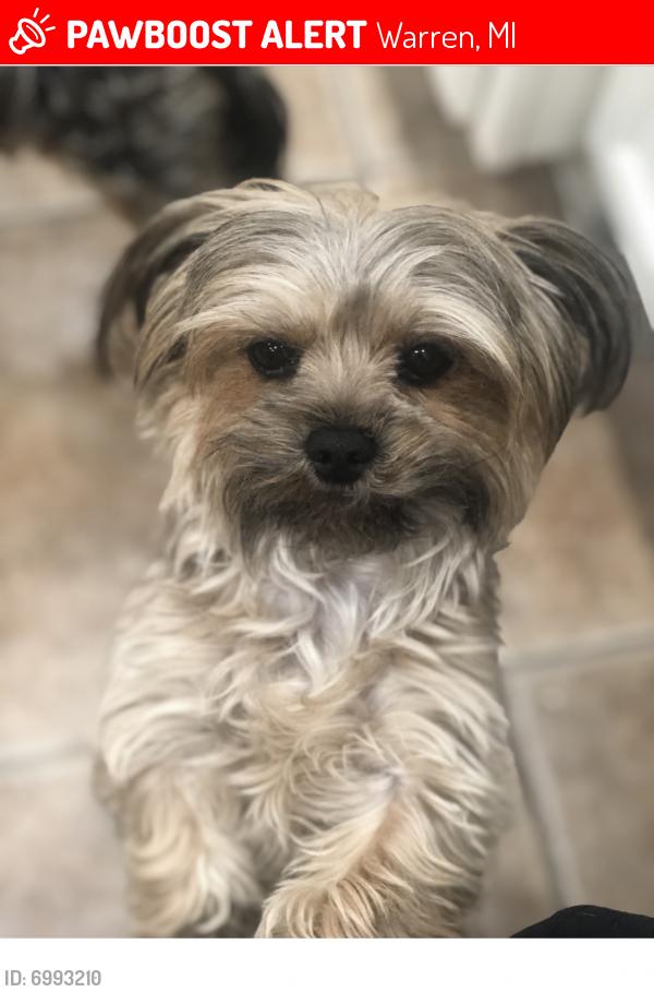 Lost Unknown Dog last seen Near mile and van dyke, Warren, MI 48089