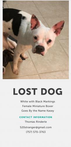 Lost Female Dog last seen Warwick Ave & Williamson Dr, Newport News, VA 23608