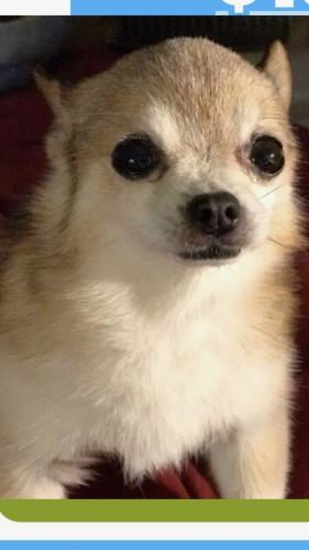 Lost Female Dog last seen RV parked on Gladwick Street, Carson, CA 90746
