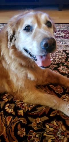 Lost Female Dog last seen NE 36th Street & Bryant Ave., Forest Park, OK 73121