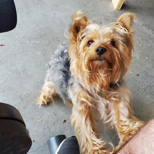 Lost Male Dog last seen Silverado Springs Neighborhood, near Remynse Elementary and Epic Waters Park, Grand Prairie, TX 75052