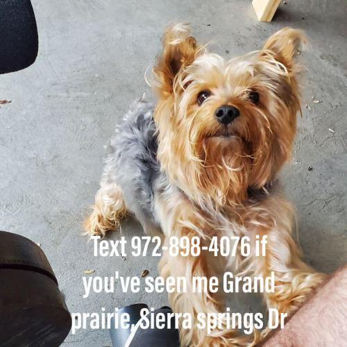 Lost Male Dog last seen Near Sierra springs Dr Grand Prairie Texas , Grand Prairie, TX 75052