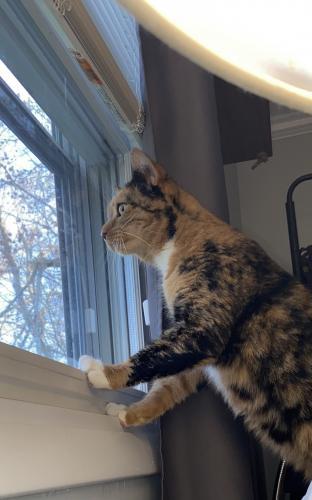 Lost Female Cat last seen Black rock turnpike, Fairfield, CT 06825