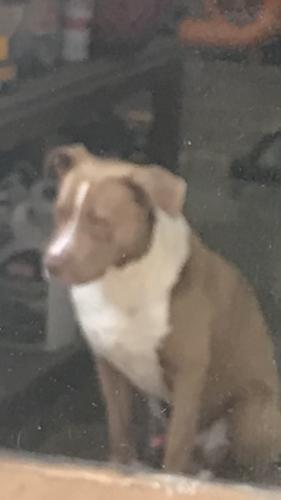Found/Stray Male Dog last seen Pebble bend , Houston, TX 77068