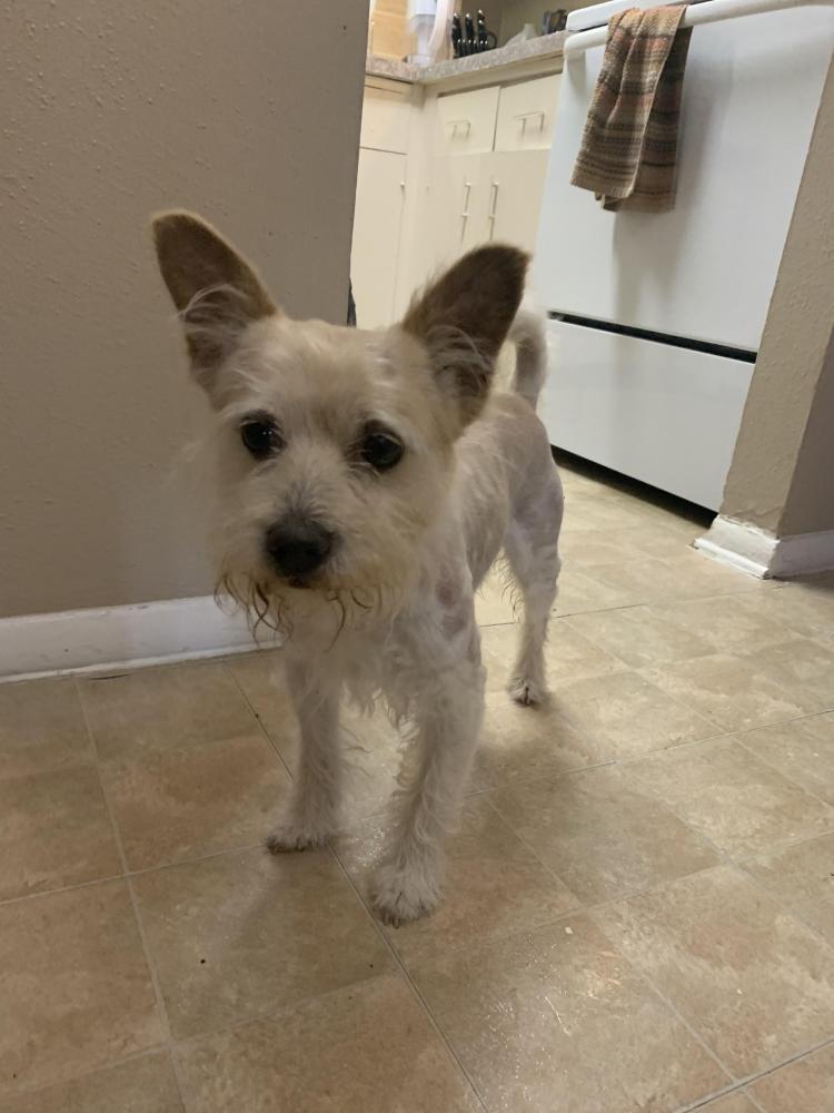 Reunited Male Dog last seen Near Jones Dr, Arlington, TX 76013