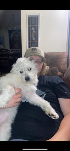 Lost Male Dog last seen Near Route 9 Cold Spring New York Camper 1 Toni's RV and trailer park. , Cold Spring, NY 10516