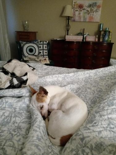 Lost Female Dog last seen Berkley Square, Hamilton, OH 45013