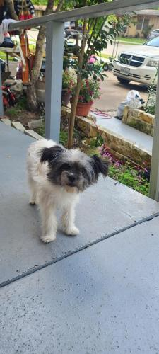 Found/Stray Male Dog last seen Reever and browning , Arlington, TX 76010