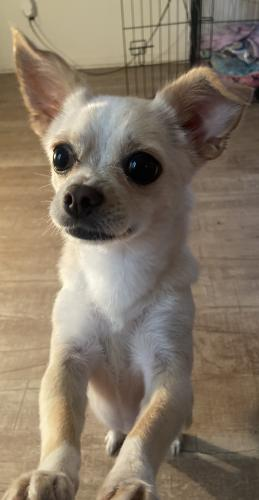 Lost Female Dog last seen Near Doty Ave apt 143, Hawthorne, CA 90250