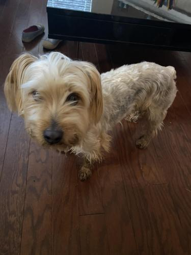 Found/Stray Male Dog last seen In front of Martha Ried school Arlington Texas , Arlington, TX 76012