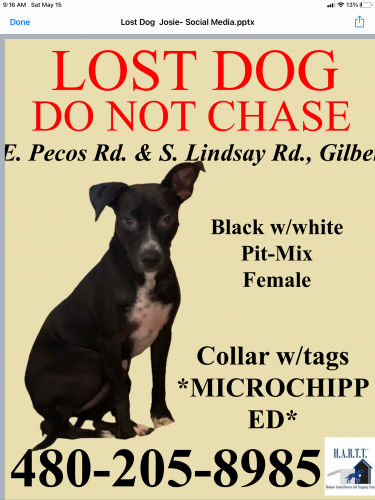 Lost Female Dog last seen Williams field and Val vista, Gilbert, AZ 85295