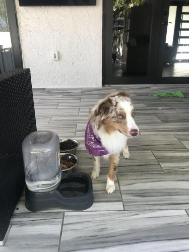 Found/Stray Male Dog last seen Near st and 124th ct sw miami fl, Miami, FL 33177