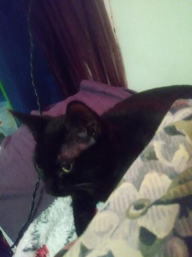 Lost Male Cat last seen Grandy Park, norchester st, Kimball terrace, Norfolk, VA 23504
