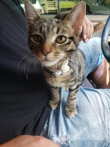 Found/Stray Female Cat last seen Kelly Elliot Rd & I20, Arlington, TX 76016