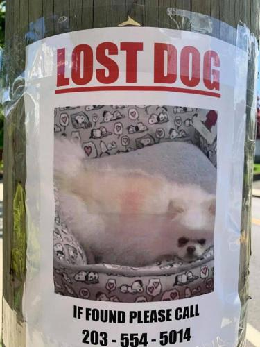 Lost Female Dog last seen Southfield Ave & Wells Ave, Stamford, CT 06902