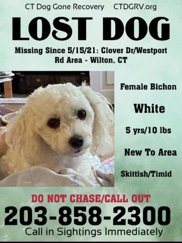 Lost Female Dog last seen Grumman Hill and Village Court , Wilton, CT 06897