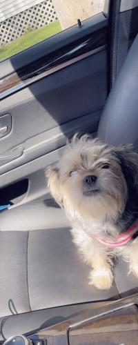 Lost Female Dog last seen 7th Ave SE, Rochester, MN 55904