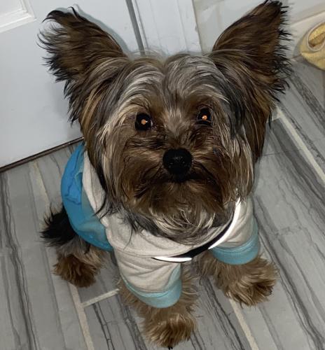 Lost Male Dog last seen Boston ave , Bridgeport, CT 06610
