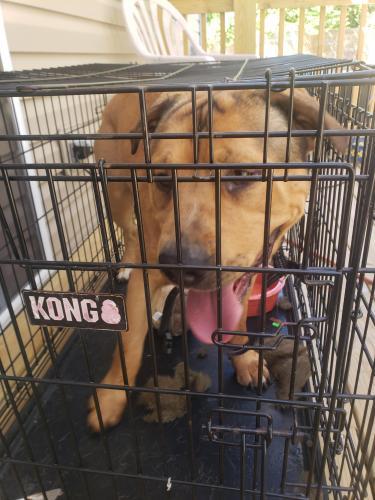 Found/Stray Male Dog last seen Cypress point park, Virginia Beach, VA 23455