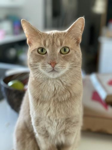Lost Male Cat last seen Woodland Meadows in front of fire station in between 7/11 and Wawa, Virginia Beach, VA 23453
