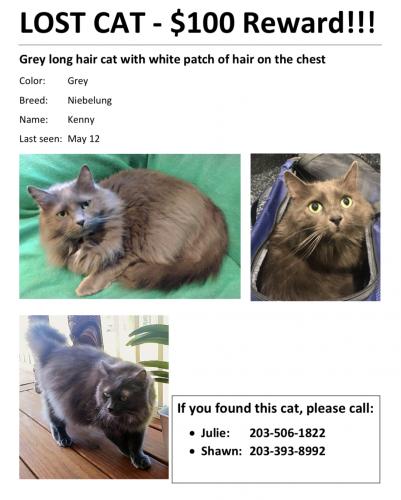 Lost Male Cat last seen Near Royal Oak court, Fort Worth, TX 76155