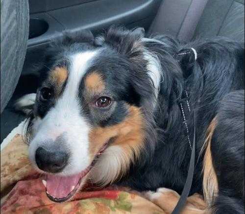 Lost Male Dog last seen Meckauer Park , Bethel, CT 06801