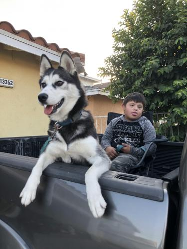 Lost Female Dog last seen Reis st or by Adventure Park in Whittier, Whittier, CA 90605