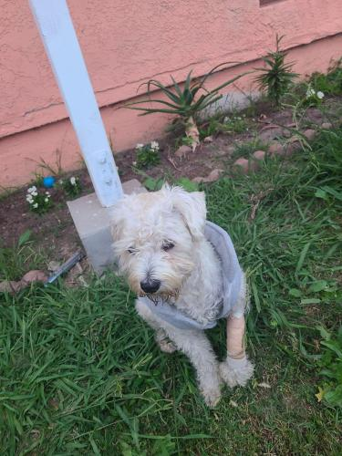Found/Stray Male Dog last seen Near North nestor ave, Compton, CA 90220