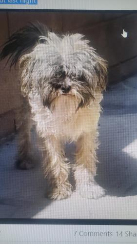 Lost Male Dog last seen Banning high school, Los Angeles, CA 90744