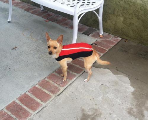 Lost Male Dog last seen Long Beach blvd and Neece St, Long Beach, CA 90805