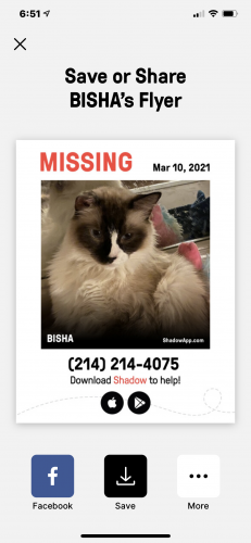Lost Male Cat last seen Diceman Ave / Daytonia , Los Angeles, CA 90028