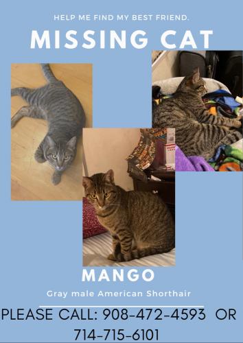 Lost Male Cat last seen Grindlay and orange , Cypress, CA 90630