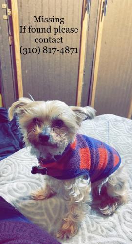 Lost Female Dog last seen Denker//145th st, Los Angeles, CA 90247