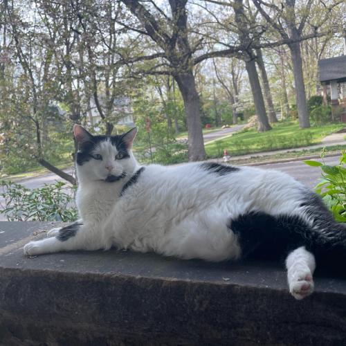 Lost Female Cat last seen coventry village , Cleveland Heights, OH 44118