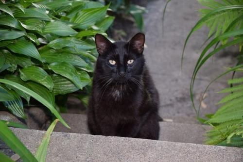 Lost Male Cat last seen Dunster Court, Reading Ave, Stoneridge Apts in Mark Center, Alexandria, VA 22311
