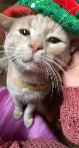 Lost Male Cat last seen 22nd off of Market , Canton, OH 44709
