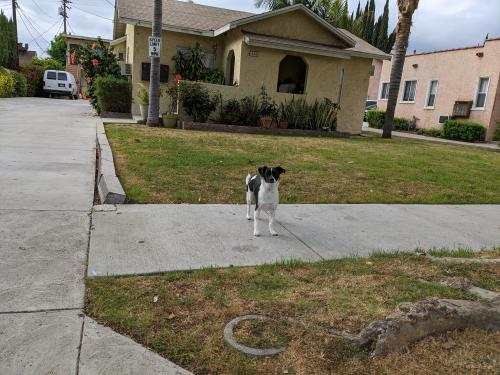 Found/Stray Unknown Dog last seen Irving and Lake, Glendale, CA 91201