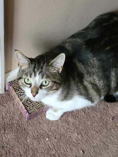 Lost Male Cat last seen Winton at Winsray, Cincinnati, OH 45224