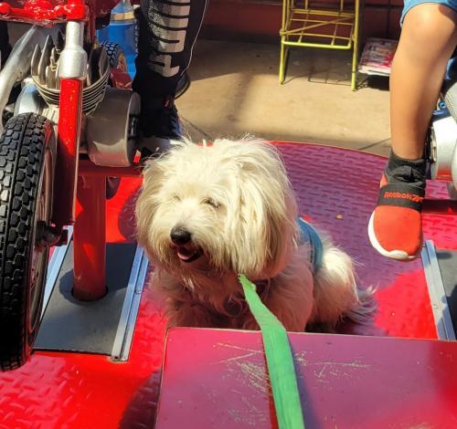 Lost Male Dog last seen Vernon y campton 90011, Los Angeles, CA 90011