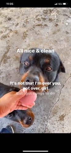 Lost Male Dog last seen S. Cookacre Ave, Compton, CA 90221