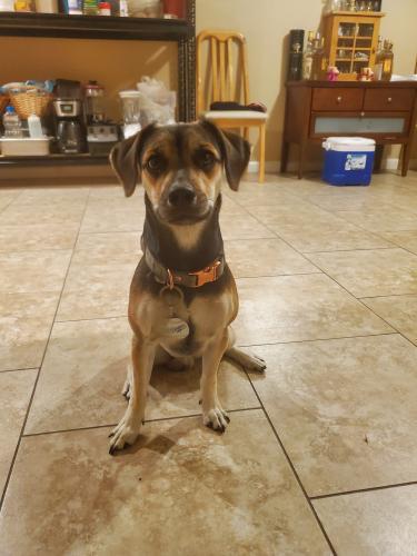 Lost Male Dog last seen Rosecrans and shoemaker, Norwalk, CA 90650